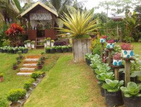 Berkebun, Suri Rumah Jana 2 Ribu Sehari