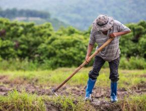 Kisah Petani Berumur 80 Tahun