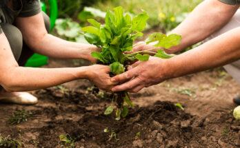 Cara Pasarkan Tanaman Bagi Pekebun Kecil