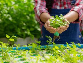 5 Cara Berkebun Tanpa tanah